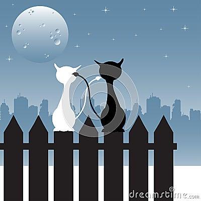 Katzen, die entlang des Mondes anstarren