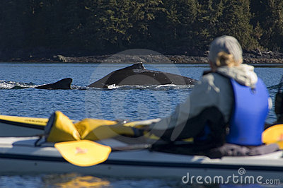 Kayak and Humpback whale