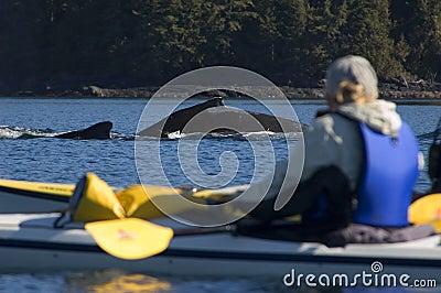 Kayak and Humpback whale