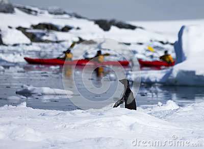 Kayaking and Penguin in Antarctica