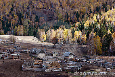 Kazakh Compound & Birch Forest