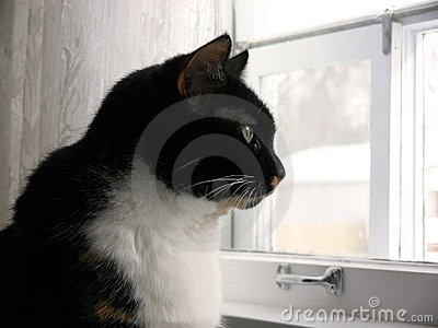 Küche-Katze 3