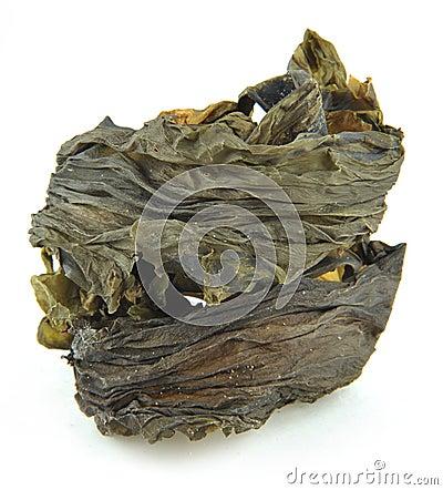 Free Kelp Royalty Free Stock Photo - 15359505