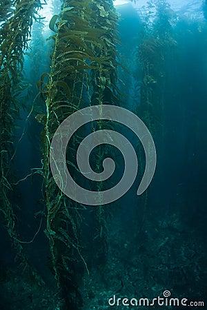 Free Kelp Growth Stock Photos - 46239673
