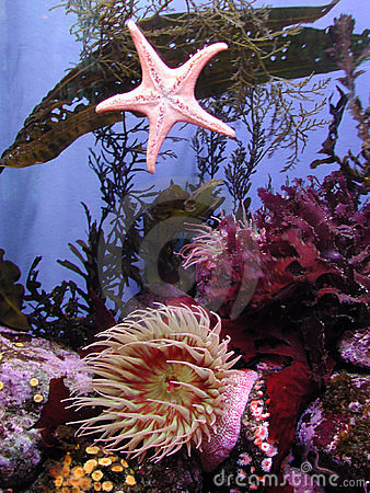 Kelps and Anemones