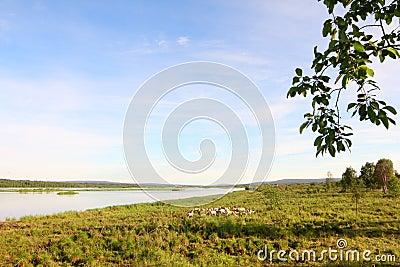 Kemijoki river