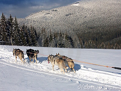 Kennel husk on Snow
