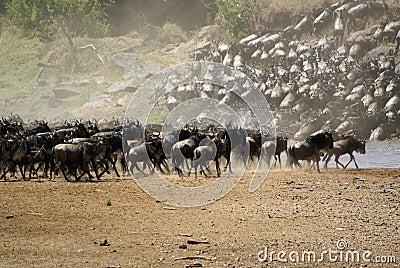 Kenya s Great Migration