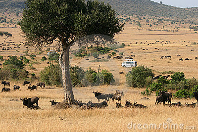 Kenya s Maasai Mara Animal Migration