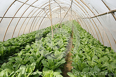 Åkerbruk tältlantgård