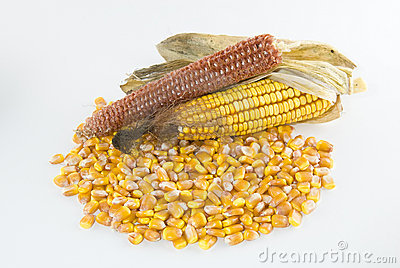 Kernels of corn in a pile with corn cob