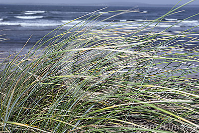 Kerry Ireland beale dune grass