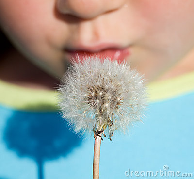 Free Kid Blowing Dandelion Seeds - Closeup Royalty Free Stock Images - 9712929