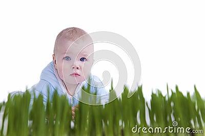Kid Crawl