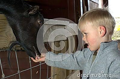 Kid feeding animal
