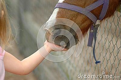 Kid feeding horse