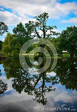 Kidney-like tree reflection