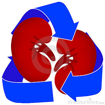 Free Kidney Organ Donation Icon Royalty Free Stock Photo - 5498315