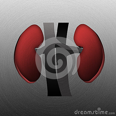 Kidneys, stamped into polished  metal