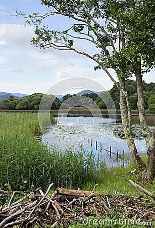 Killarney lakeside scene