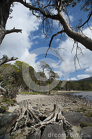killarney national park 003