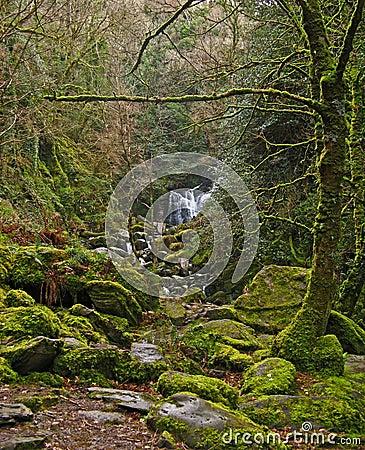 Free Killarney National Park 07 Stock Photo - 6415460