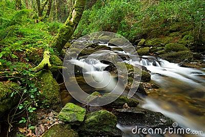 Killarney National Park creek