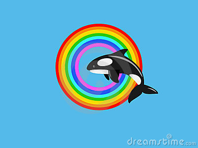 Killer whale jumping in rainbow ring