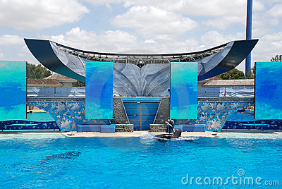 Killer whale shamu show in seaworld san diego Editorial Stock Image