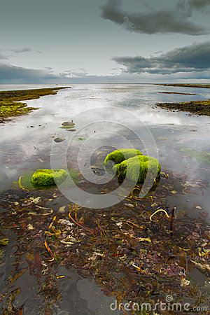 Free Kimmeridge Beach Royalty Free Stock Photo - 32214465