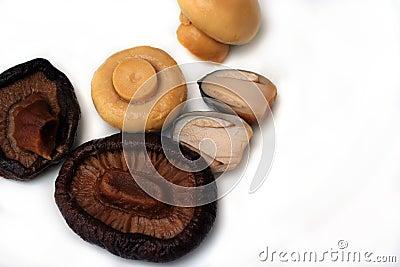 Kind of mushroom