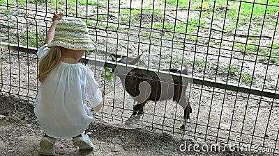 4.000 kinderen die babygeit eten hebben, zoo Park, Happy Child Pplay met Dieren, Girl Outdoor in de natuur stock videobeelden