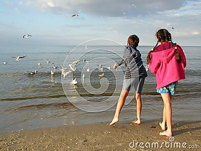 Kinderen die Zeemeeuwen voeden
