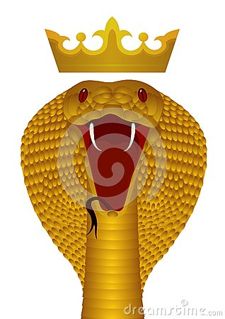 King Cobra Gold