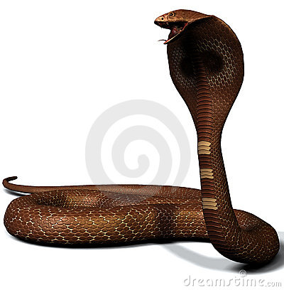 Royalty Free Illustration: King cobra snake. Image: 755