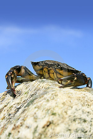 King of the Crabs