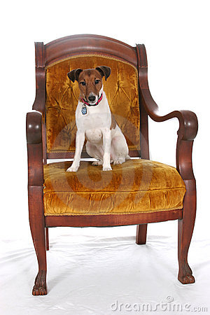 King Jack Russell