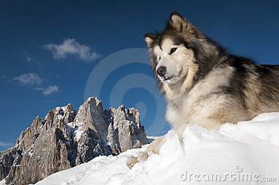 The King of the Mountain