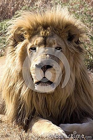 King of the wild II