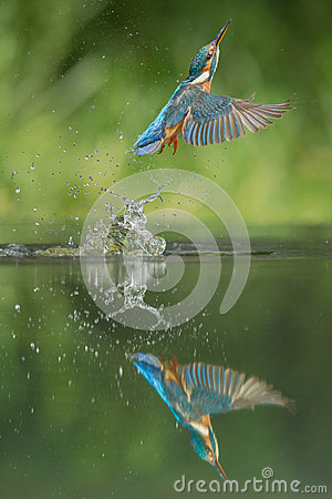 Free Kingfisher Stock Photos - 33047423