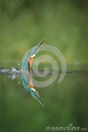Free Kingfisher Royalty Free Stock Images - 43101649