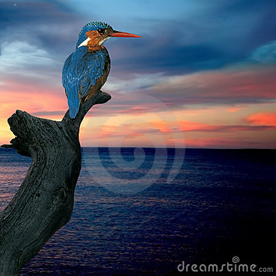 Free Kingfisher (Alcedo Atthis) Stock Photos - 7616803