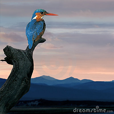 Free Kingfisher (Alcedo Atthis) Royalty Free Stock Images - 7648699