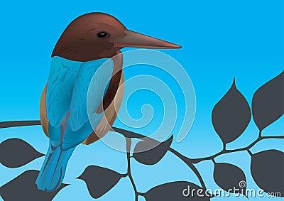 Kingfisher Bird Vector Illustration