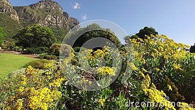 Kirstenbosch botaniska trädgårdar - Cape Town
