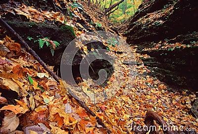 Kishwaukee Gorge Forest Preseve