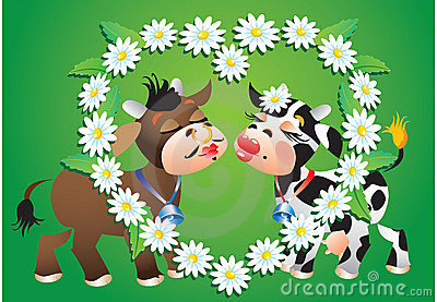 Kissing Cows and camomile border