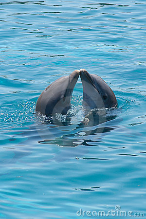 kissing dolphins royalty free stock image image 9381366 dolphin clipart gif dolphin clipart black and white