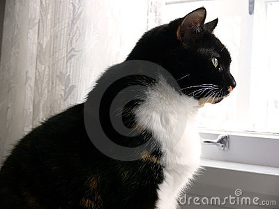 Kitchen Cat 2