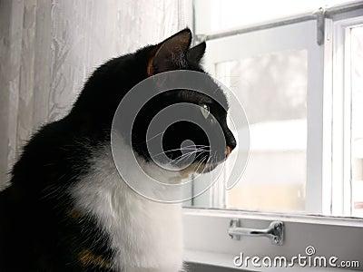 Kitchen Cat 3